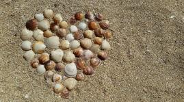 heart-mussels-harmony-love-161002[1]