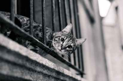 cat-balcony-surprised-look-80363