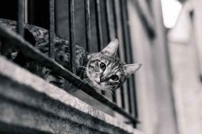 cat-balcony-surprised-look-80363